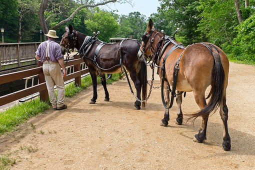 Canal, Man, Mules, Summer, Spring, Animals, Towpath