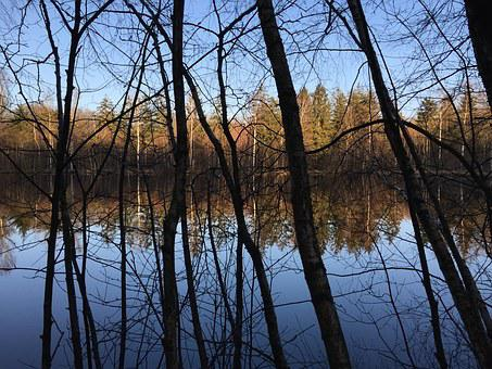 Forest, Forest Lake, Contrast, Mirror, Mirroring, Wood