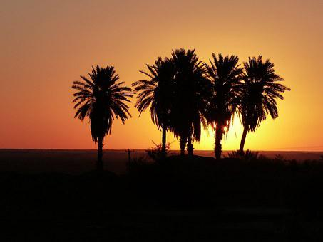 Sunrise, Desert, Iran, Palm Trees, Oasis, Sky, Morning