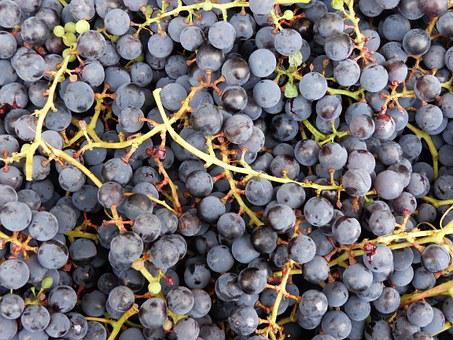 Bunch Of Grapes, Fruit, Grapes, Nature, Owocostan