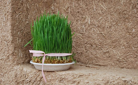 Grass, Norooz, Wall, Nature, Green, Iran, Natural