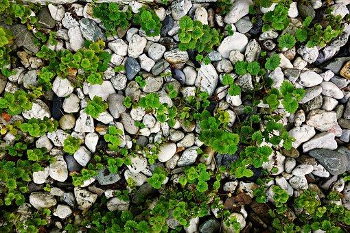 Stones, Pebbles, Plants, Growth, Growing, Arrangement