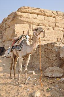 Camel, Dromedary, Egypt, Pyramids, Tourist, Giza