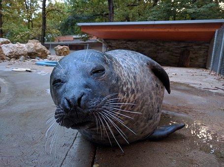Seal, Zoo, Peek-a-boo, I've, Mammals