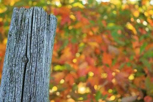 Fence Post, Weathered, Worn, Split, Autumn, Color
