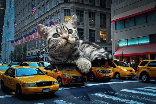 Cat, Giant, Fun, Monster, Composing, Catzilla, Animal