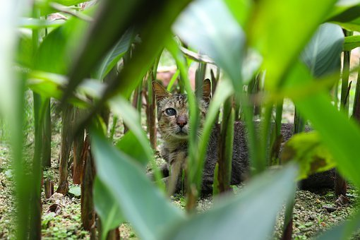 Cat, Animals, Nature, Outdoor, Pets, Animal Pictures