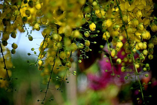 Yellow, Flowers, Nature, Blossom, Bloom, Summer, Plant