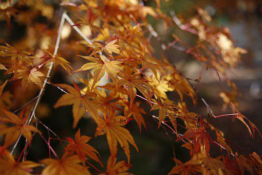 Autumn, Yellow Leaves, Red Leaf, Change Leaves