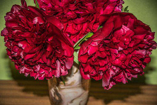 Bouquet, Peonies, Flower, Flora, Close Up, Romantic