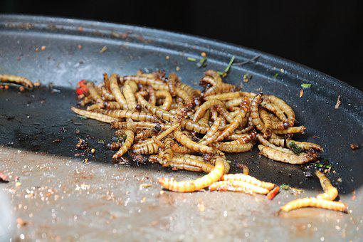 Mealworms, Insect, Food, Healthy, Nutritious, Fry