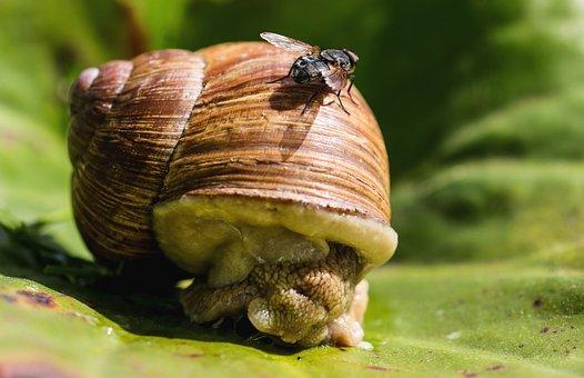Animals, Snail, Mollusk, Shell, Garden, Crawl, Fly