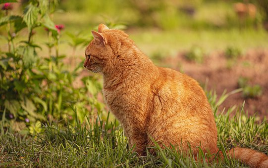 Cat, Meadow, Garden, Lighting, Pet, Nature, Grass