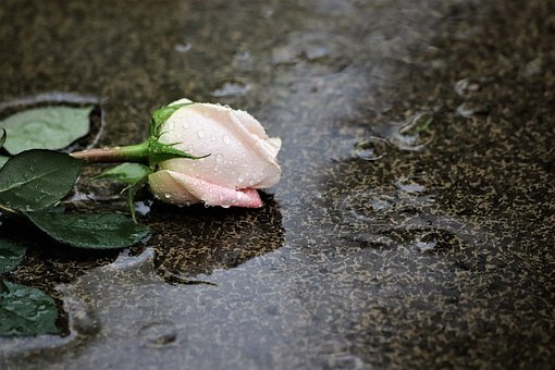 Pink Rose In Rain, Grey Marble, Love Symbol, Gravestone