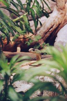 Snake, Green, Head, Exotic, Tropical