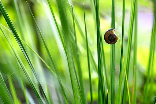 Halme, Shell, Snail Shell, Blades Of Grass, Green