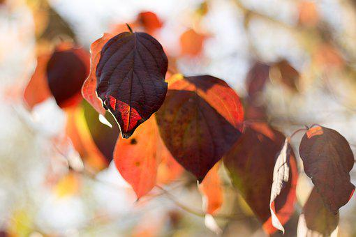Leaves, Leaf, Brown, Dry, Nature, Forest, Autumn