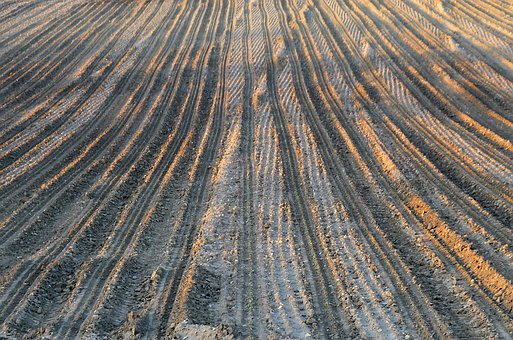 Field, Traces, Soil, Light, Evening, Agriculture, Earth