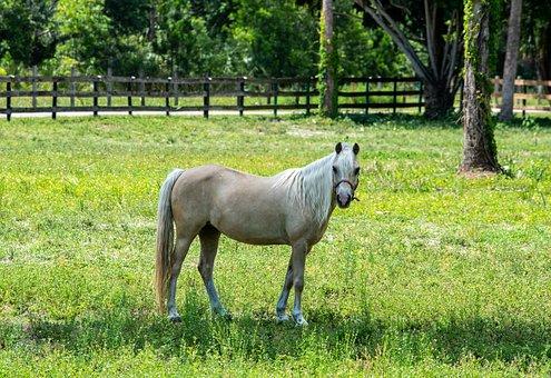 Mare, Farm, Animal, Nature, Ride, Equine