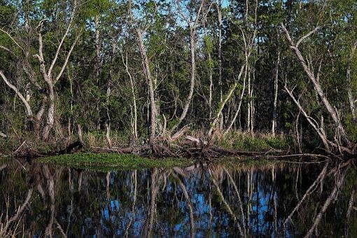 Louisiana, Swamp, Bayou, Marsh, Landscape, Wetland