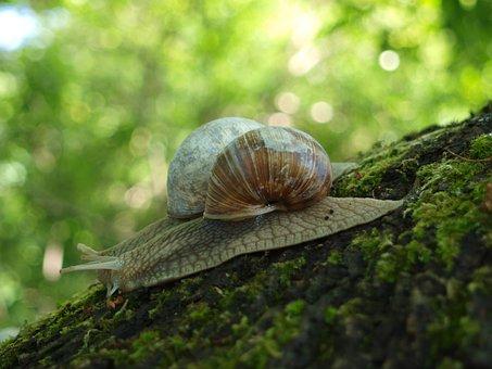 Snail, Shell, Crawl, Nature, Mollusk, Animal, Mucus