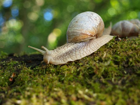 Snail, Shell, Nature, Mollusk, Slowly, Animal, Mucus