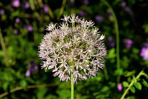 Flower, Wild Flower, Ball, Shape, Multiple, Stamen