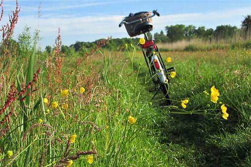 Bicycle, Outdoor, Flowers, Morning, Activity, Nature