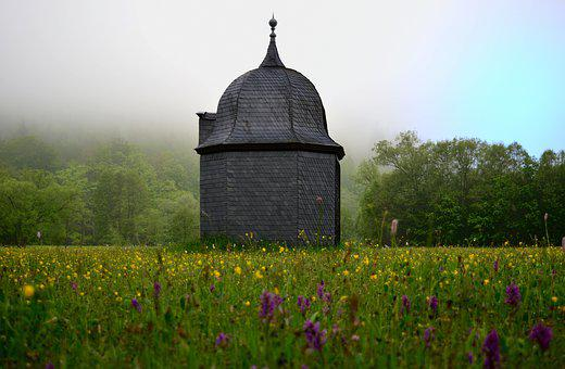 Park, Orchid Meadow, Hammer Barn, Thuringia Germany