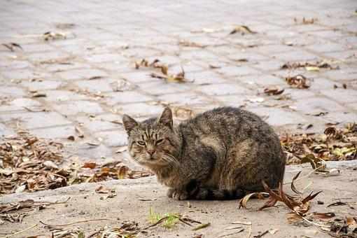 Cat, Homeless Animals, Animals, Stray Cat, Pets, Kitten