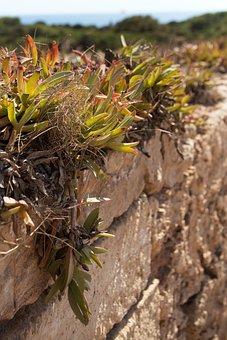 Plant, Wall, Weed, Spain, Mallorca, Sea, Nature