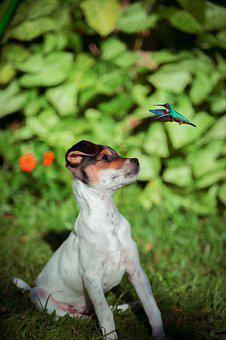 Dog, Pets, Animals, Puppy, Snout, Hummingbird
