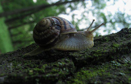 Snail, Nature, Animals, Invertebrates, Biology, Slowly
