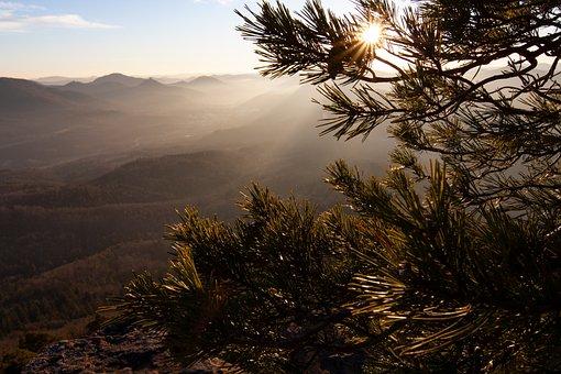 Sun, Nature, Moss, Landscape, Mood, Sunlight, Scenic