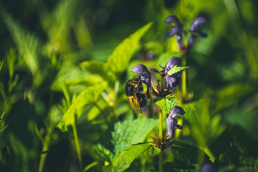 Bee, Animal, Bumble-bee, Sheet, Leaves, Plant, Plants