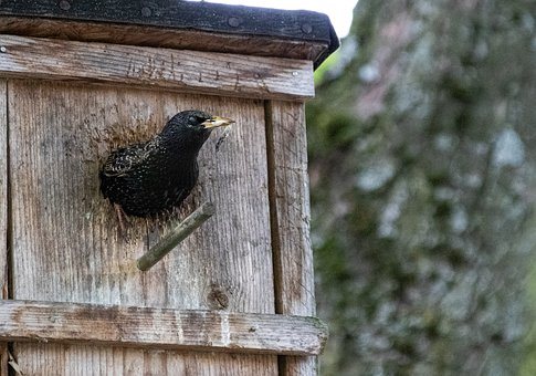 Animals, Birds, Songbirds, Star, Stare, Nesting Box