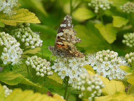 Butterfly, Spring, Colored, Flowers, Insect, Nature