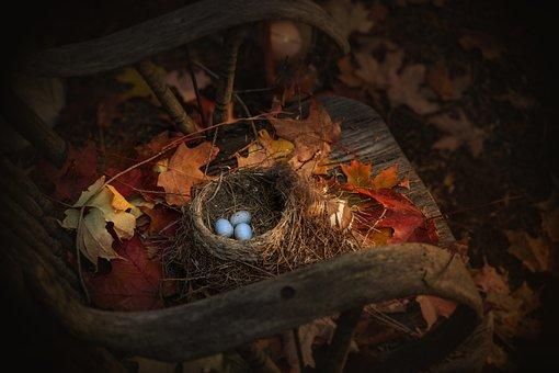 Easter, Bird Nest, Nature, Bird, Decoration, Eggs