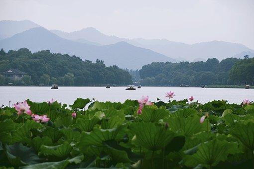 Flower, Flowering, Leaf, Natural, In Full Bloom, Lotus