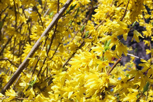 Flowers, Clusters, Yellow Flowers
