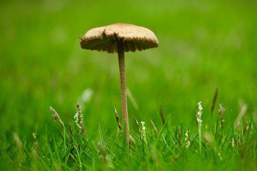 Mushroom, Fresh, Natural, Strains