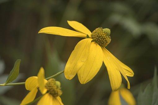 Sunflower Yellow, Flower, Floral, Garden, Petal, Plant