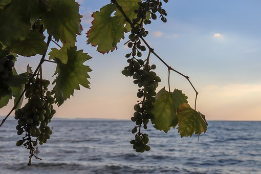 Wine, Sea, Grapes, Sky, Clouds, Afterglow, Vacations