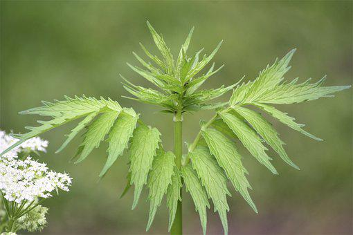 Fern, Leaves, Spring, Walk In The Park, Hh