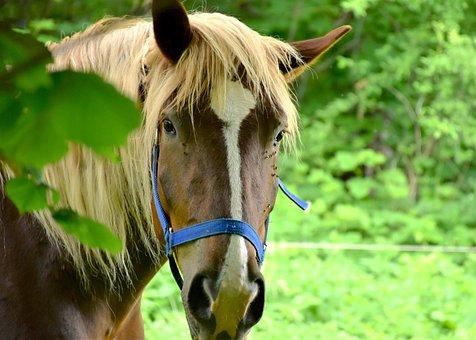 Horse, Animal, Ride, Horse Head, Pasture, Mare