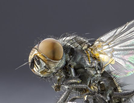 Fly, Head, Close-up, Macro Photography, Nature, Insect