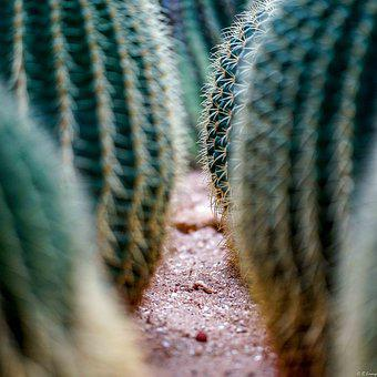 Danger, Risk, Threat, Nature, Atmosphere, Fear, Cactus