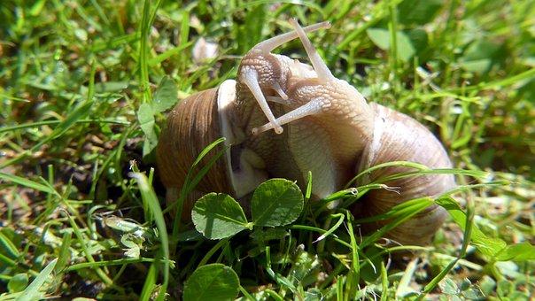 Garden, Snails, Nature, Love
