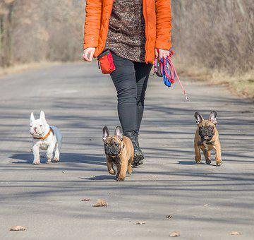 French Bulldog, Funny, Dog, Puppy, Pet, Animals, Cute