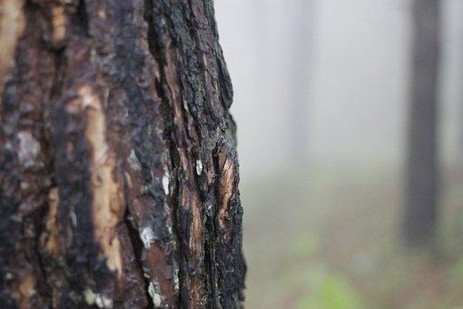 Pine Tree Bark, Tree, Bark, Nature, Wood, Forest
